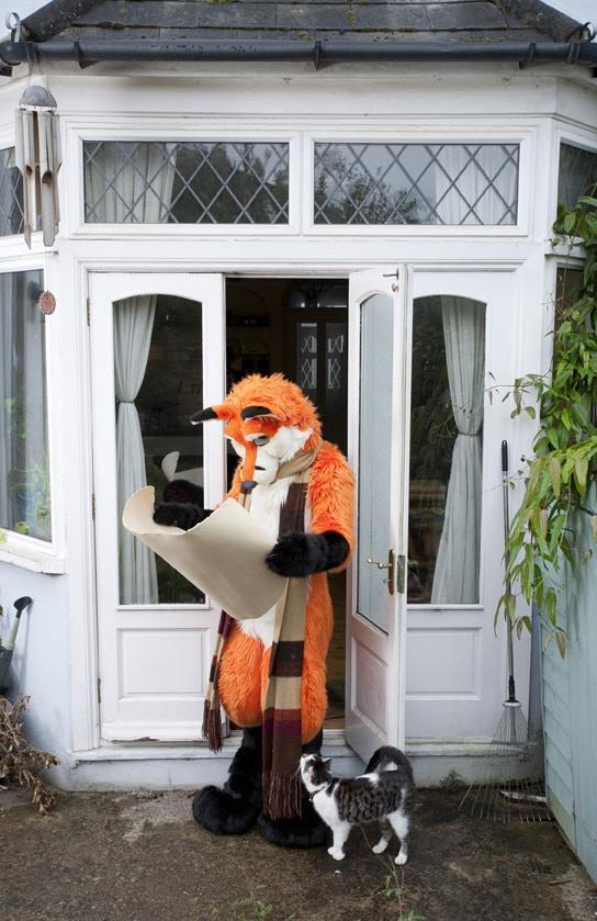 Sticks, the fox (2 of 4 postcards)