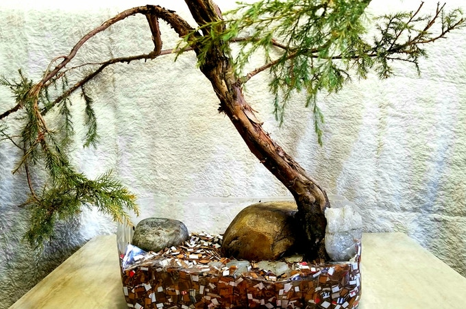 Bonsai I Made In Recycled Pot And EcoPet Bedding