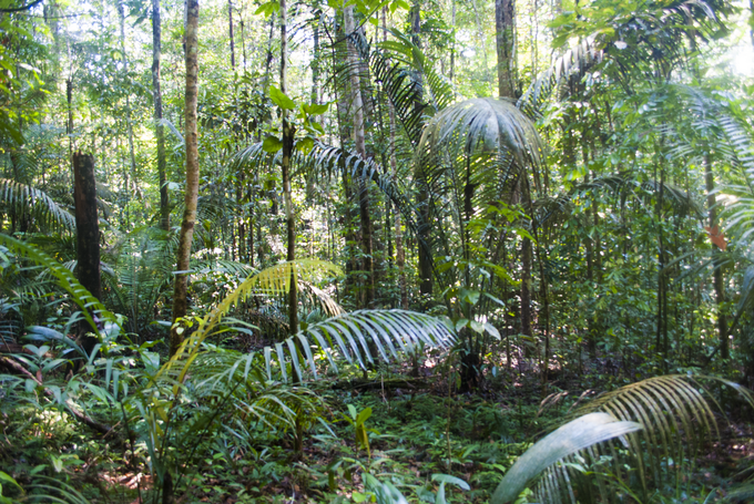 The forest outside of Manaus, Brazil