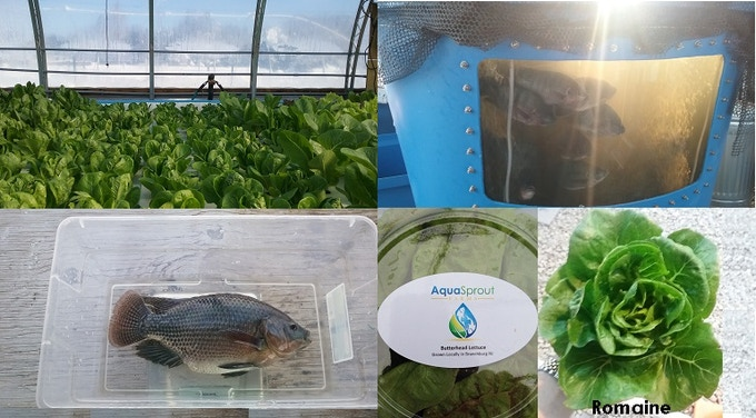 Aquasprout farms an aquaponics farm in branchburg nj by for Plenty of fish home page
