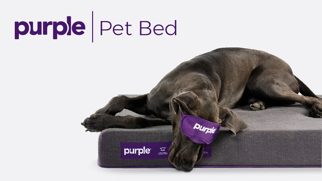 Purple Pet Bed Scientific Comfort For Your Furry Friend By Tony