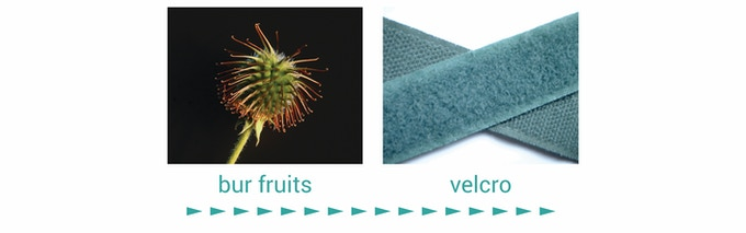 Did you know the tiny hooks on bur fruits inspired velcro tape. Synthetic Setae™ raises the stakes to a whole new level.