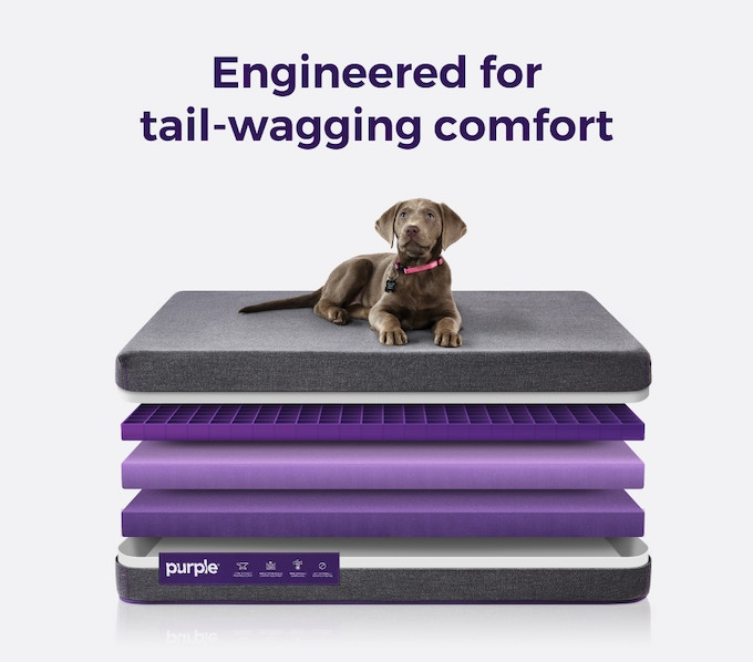 Pledge to reserve your purpler pet bed now with for Sound proof dog bed