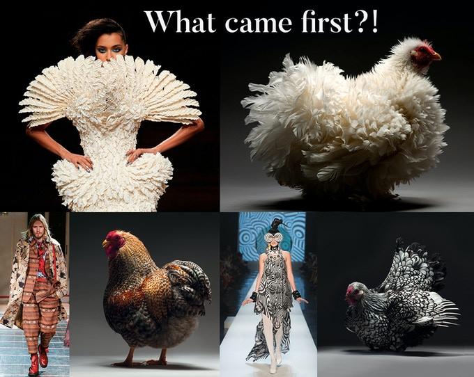 Fashion CHICken