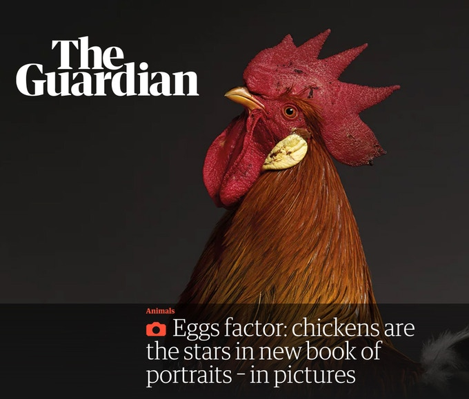 CHICken Featured On The Guardian
