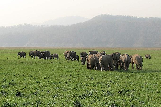 Asian elephants in India - © WWF-India