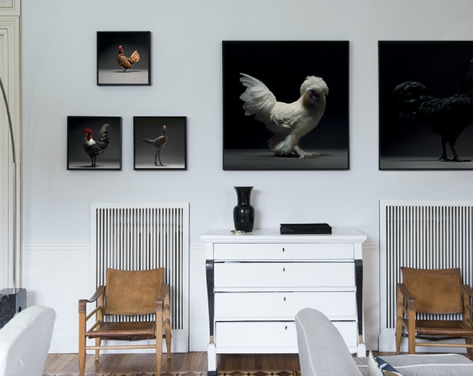 Photographic Prints of Beautiful Feathered Chickens