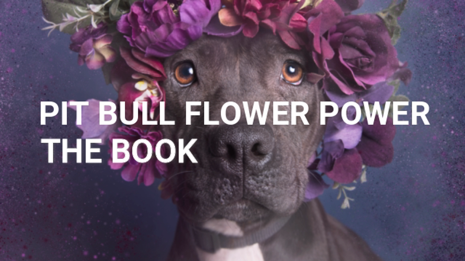 Pit Bull Flower Power: the book is the top crowdfunding project launched today. Pit Bull Flower Power: the book raised over $173181 from 1536 backers. Other top projects include The Planets: Earth Playing Cards [3 of 8], Poverty, Peekapet...