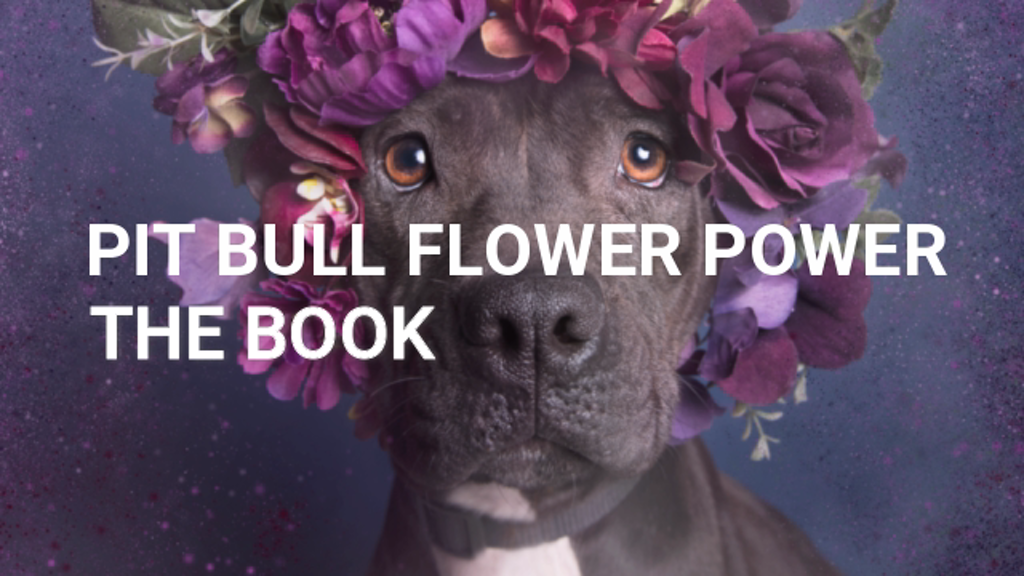 Pit Bull Flower Power: the book project video thumbnail