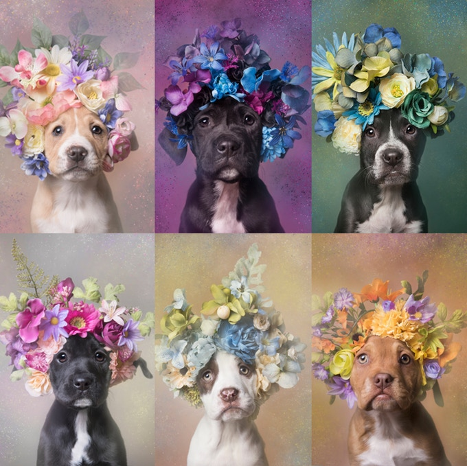 These puppies, the Friends litter, were being sold for $40 each in a driveway. They were rescued and all found homes, partly thanks to these portraits.