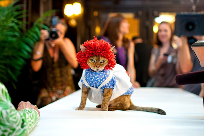 At the Algonquin Hotel Cat Fashion Show in 2010 (Katie Sokoler / Gothamist)