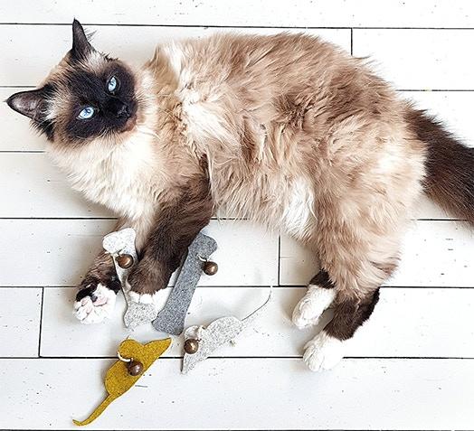 Jouets naturels pour chiens et chats (os et souris)