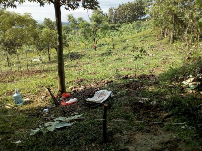 longan garden project land.