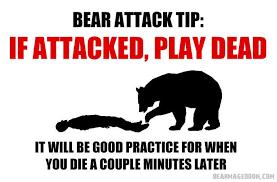 I took up shameless bear-memery in my spare time