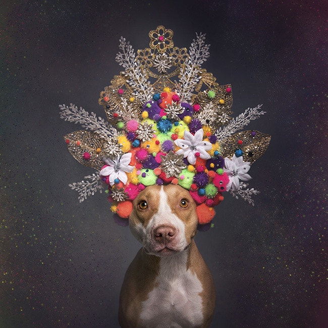 Frida's special Pit Bull Flower Power portrait.