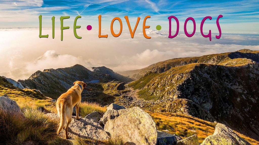 LIFE · LOVE · DOGS - A Documentary
