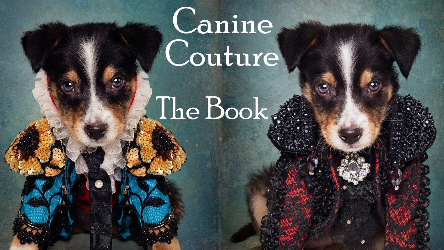 Pre-Order Pet Couturier Anthony Rubio's hard cover coffee table book 'Canine Couture' featuring shelter pets in editorial outfits.
