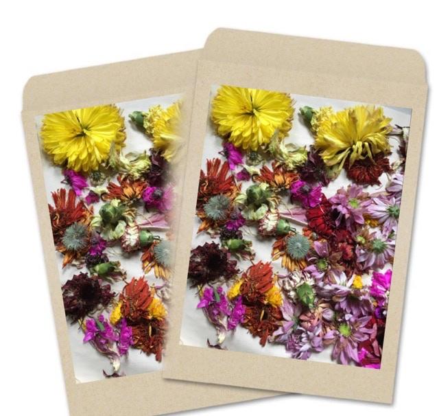 """""""In Bloom"""" Seed Packet $15 CA"""