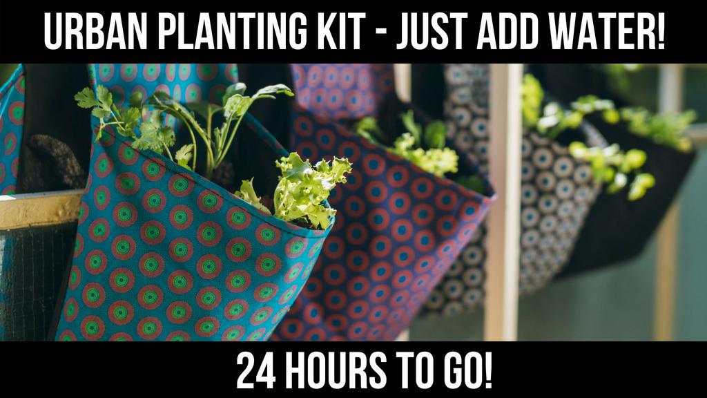 Urban Gardening Kit | Just add Water project video thumbnail