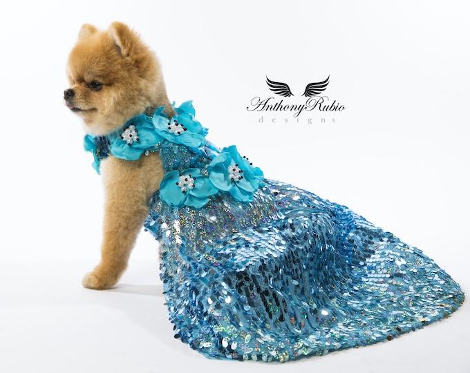LaLa, a Pomeranian wearing Anthony Rubio Designs (Photo by Jeremy Elias Sabater)