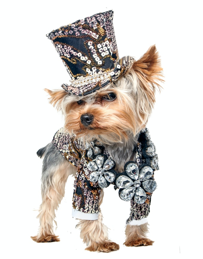 Rocco, a Yorkie wearing Anthony Rubio Designs (Photo by Yoni Levy)