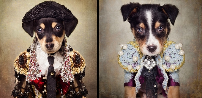 The Shelter Pets Project, Photo by Tammy Swarek, Canine Couture by Anthony Rubio
