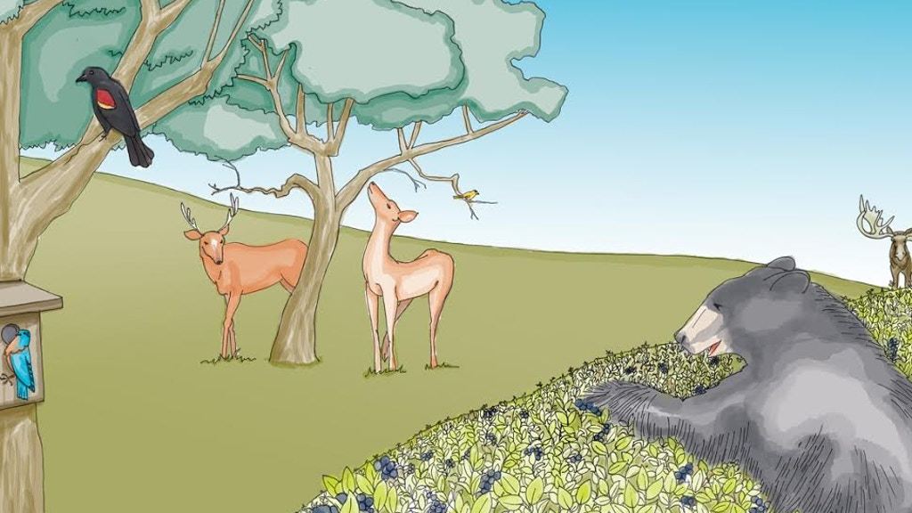 I Never Saw a Moose in Moosalamoo, a Vermont Children's Book