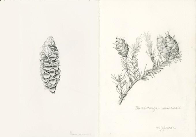 Practice Makes Perfect II: Botanical Illustration