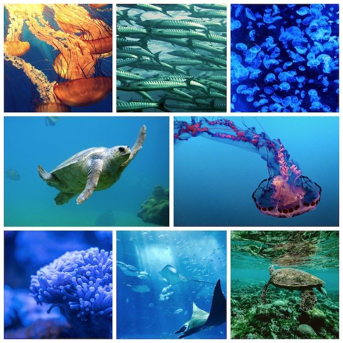 SUPA HUKA: The Future of Underwater Exploration by SUPA HUKA