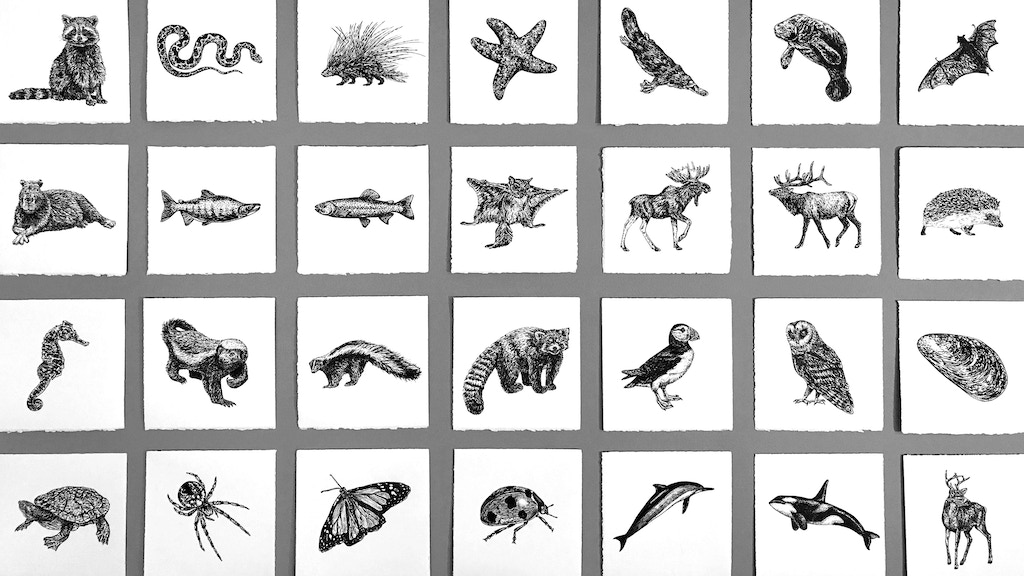100 INK ANIMALS - an illustrated book & oracle card deck project video thumbnail