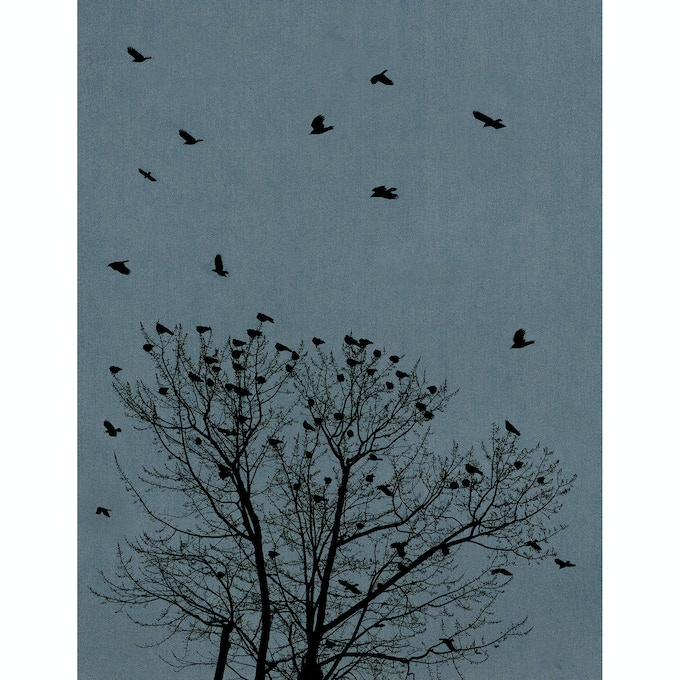 Untitled (crows)