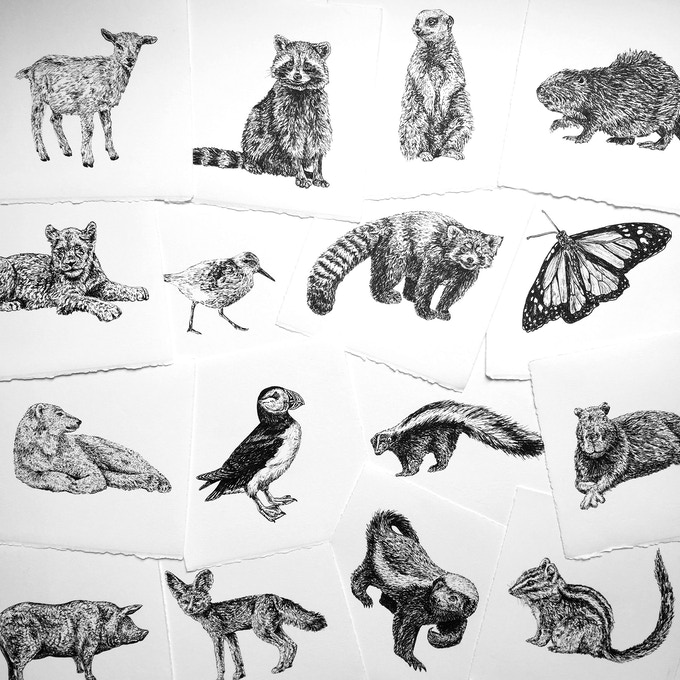 a small selection of the 100 ink drawings