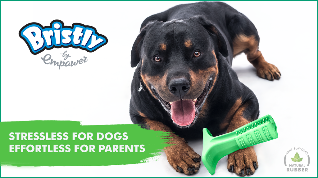 Bristly - World's Most Effective Toothbrush for Dogs