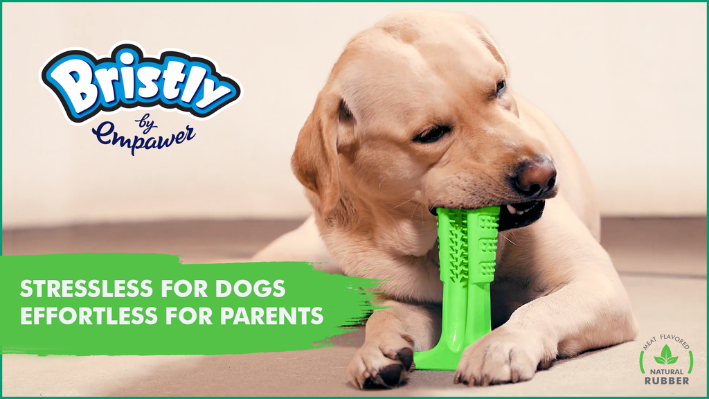 Bristly - World's Most Effective Toothbrush for Dogs project video thumbnail
