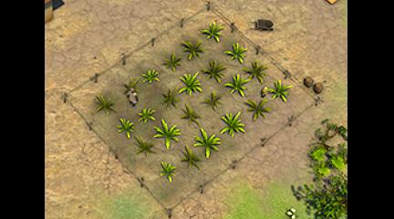 Mango Trees / Crops