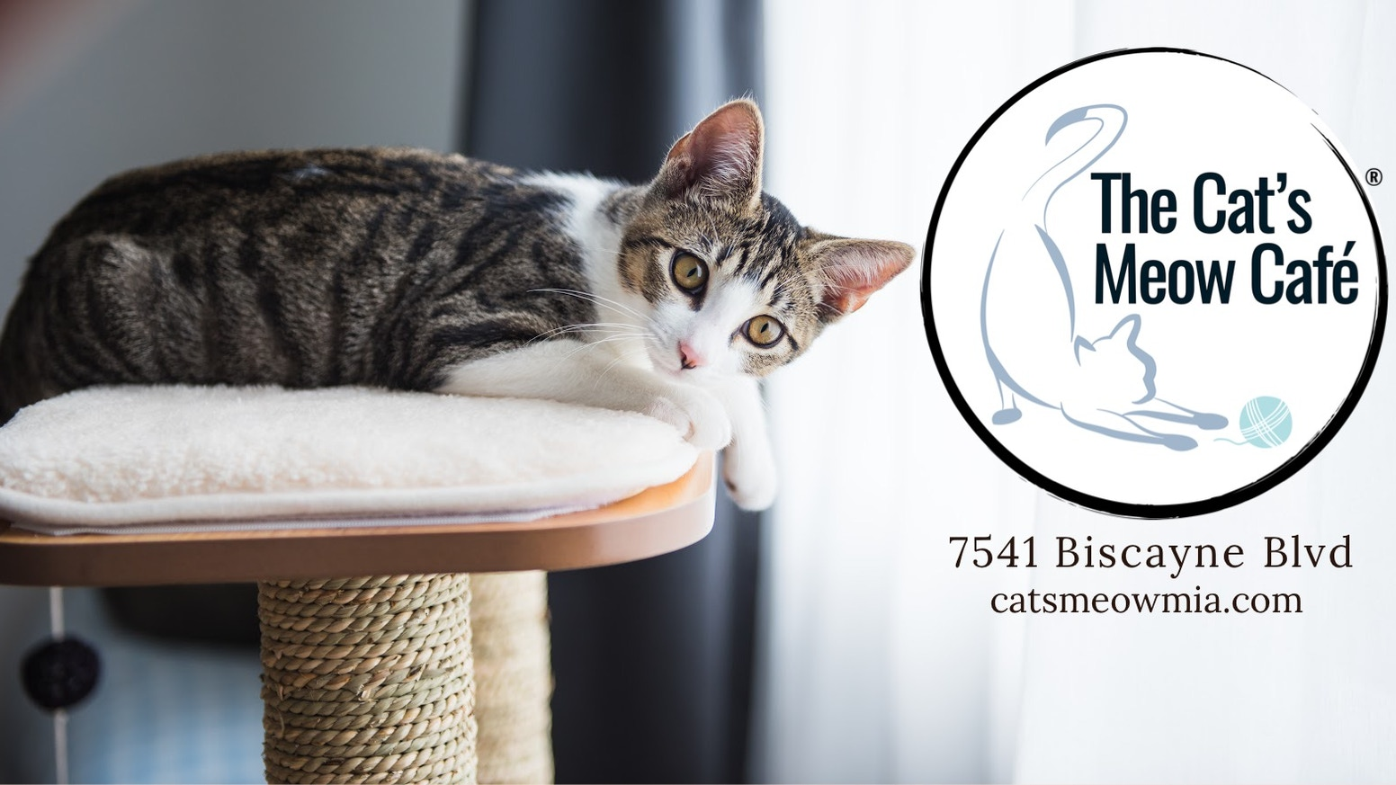 A unique cat café experience that ties in coffee with rescued cats.