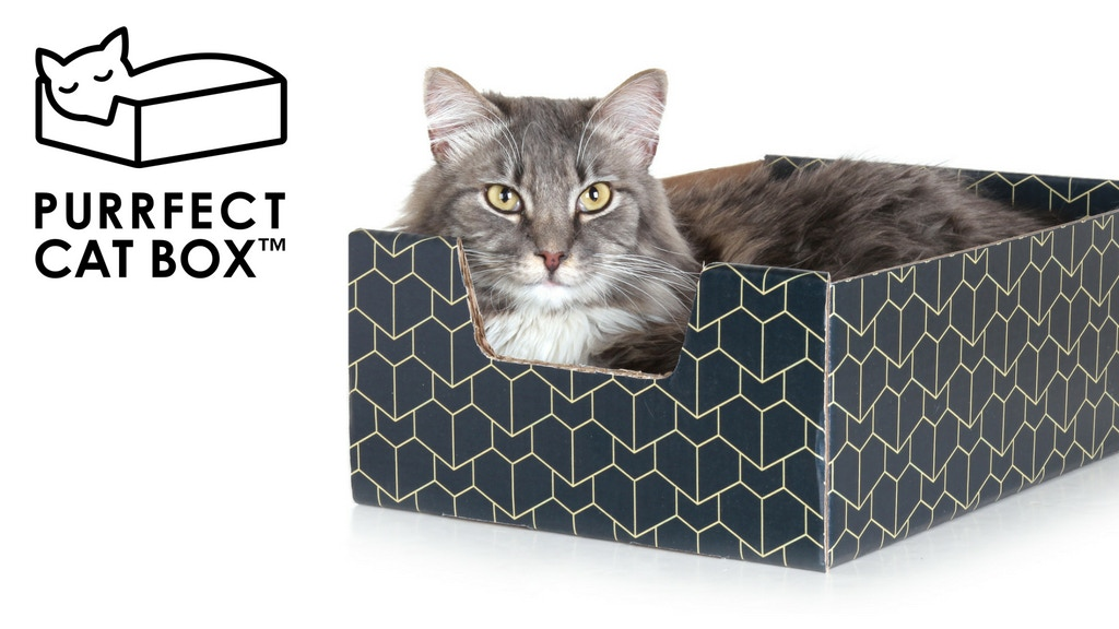 The Purrfect Cat Box project video thumbnail