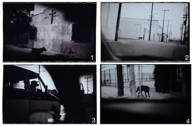 STRAY DOGS Print - Auswahl