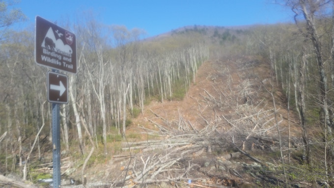 Photo of destruction along the Atlantic Coast Pipeline's path, with trees chopped down directly on a Nature Trail in Augusta County, Virginia.