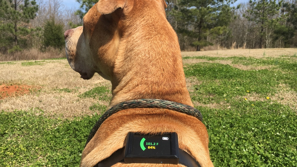 Project image for Dawg Tag : Core Temperature Sensing Harness for Dogs