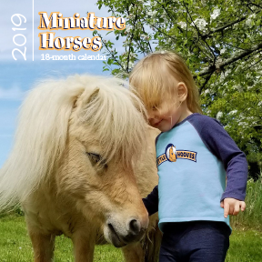 Little Hooves Miniature Horse And Pony Calendar By Little Hooves