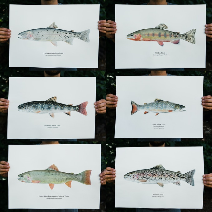 Chase Bartee Original Trout Watercolor Paintings