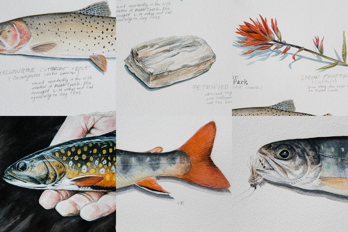 Details of Yellowstone Journal Study, Out of the Darkness & Brook Trout + Elk Hair Caddis