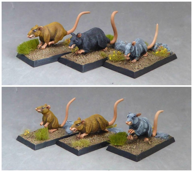 Example of Painted Giant and Great Rats - sculpted by Bob Olley and painted by Paul Sanderson (miniatures supplied unpainted and without bases).