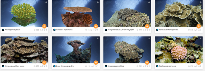Digital 3D coral models, collected around the world