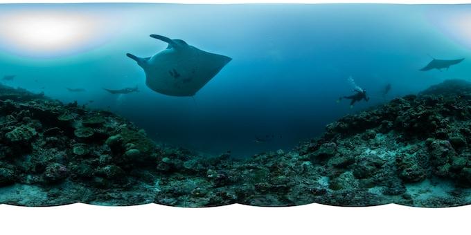 360º underwater photospheres of coral reefs