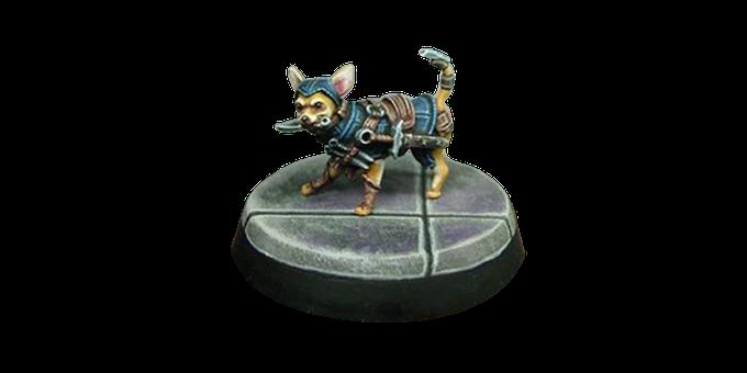 Tedric the Chihuahua Rogue