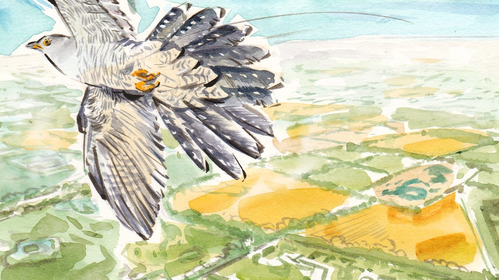 The Cuckoo Will Call - a book about saving our environment project video thumbnail