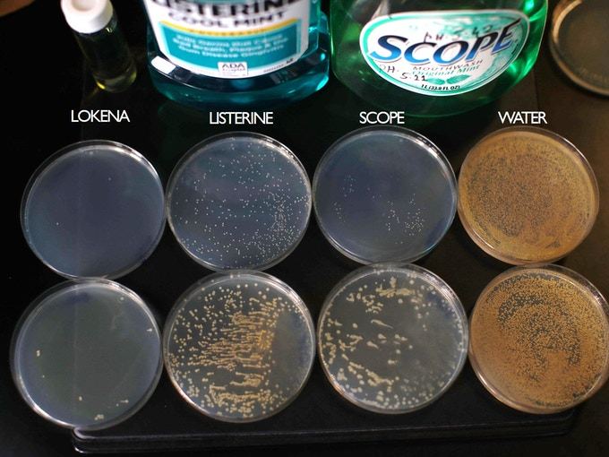 """The image shows the result of a """"Kill-time"""" study – a standardized method to test how effective bacteria is eliminated (test ASTM E2783).  Each dish was rinsed with mouthwash for 15 seconds and then bacteria was grown for 12 hours."""