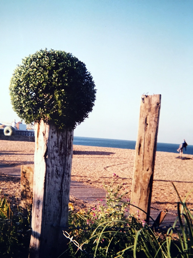 Genetically Modified Hedge by Sam Abrahams